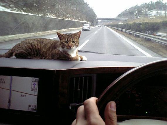 fotos-cuquis-gatos-15