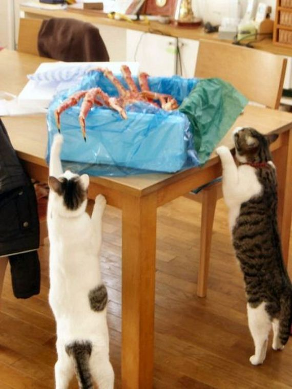 fotos-cuquis-gatos-17