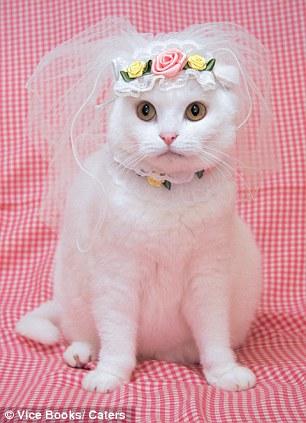 gata-boda