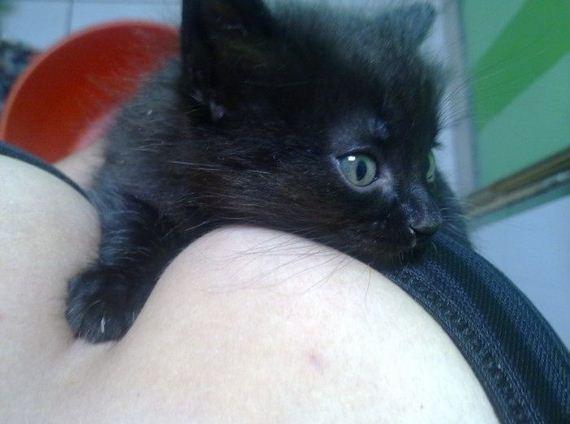 gatito-escote