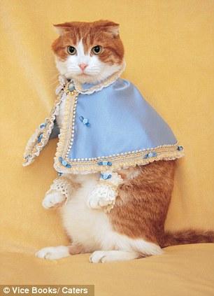 gato-boda