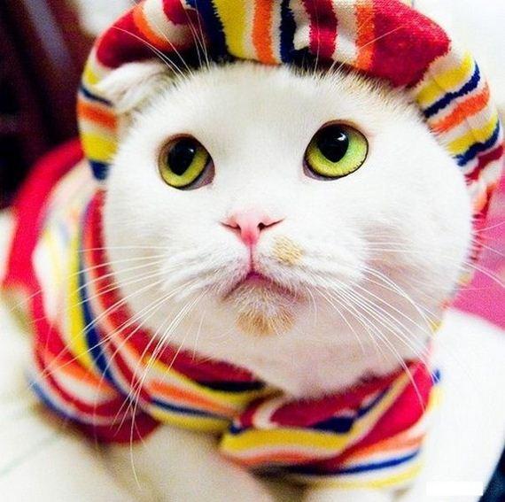 gato-friolero