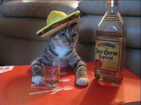 gato-mexicano