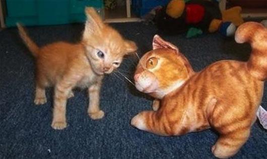 gato-mosqueado