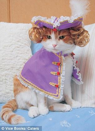 gato-rico