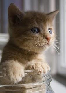 gato-vaso
