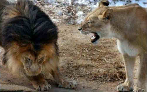 leona-bronca