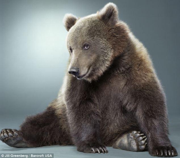 oso-simpatico