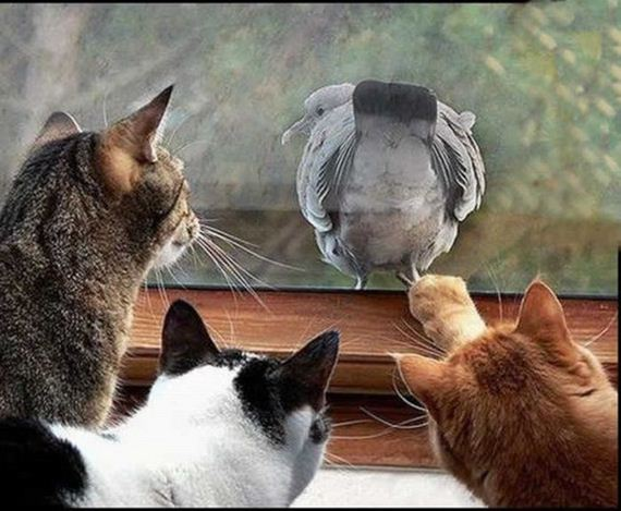 paloma-gatos
