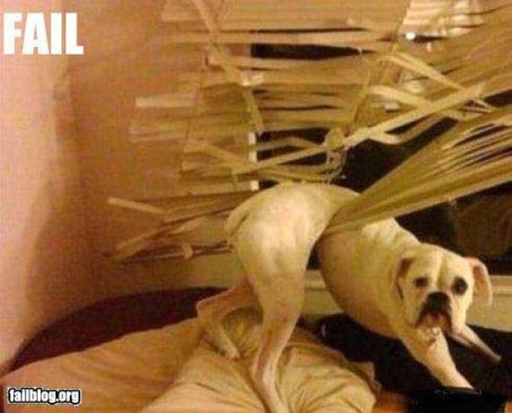 perro-travieso
