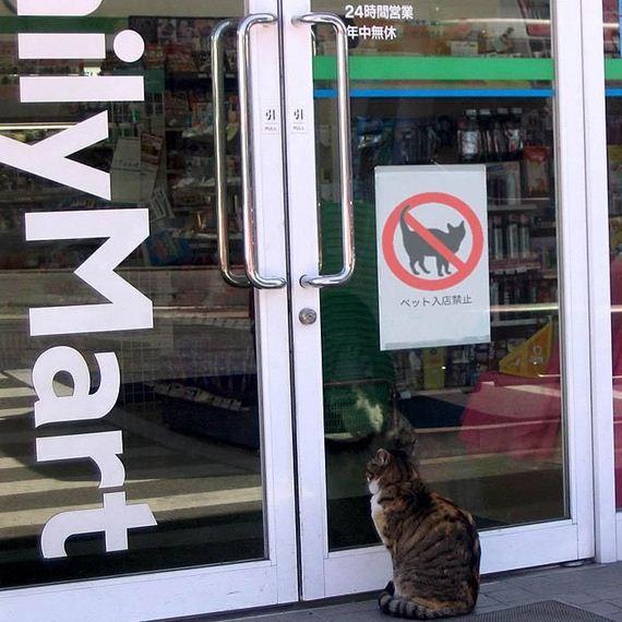 prohibido-gatos