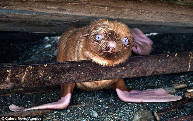 cria-foca-extraña-01