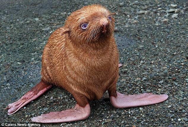 cria-foca-extraña-02