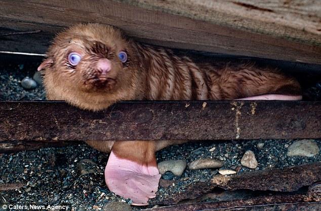 cria-foca-extraña-03