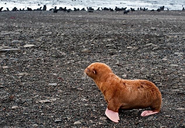 cria-foca-extraña-04