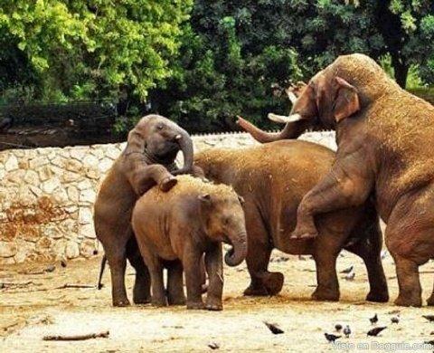elefantes-guarros