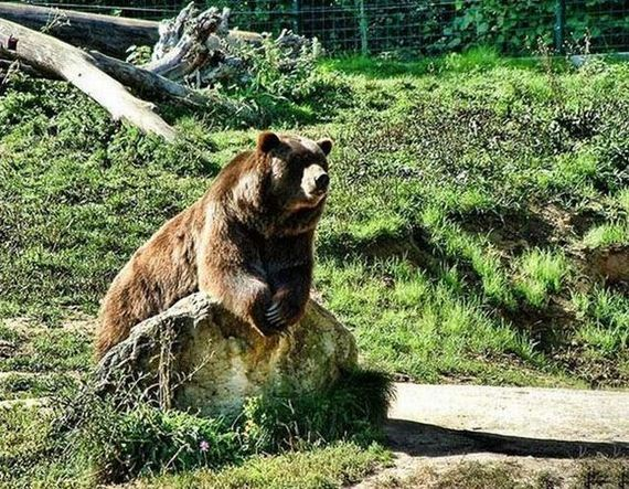 espera-oso