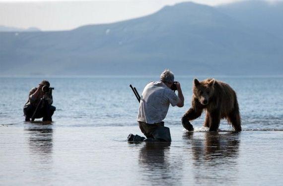fotografo-oso