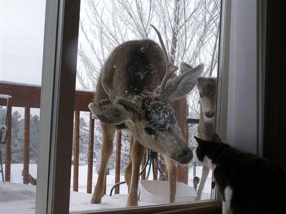 gato-ciervo