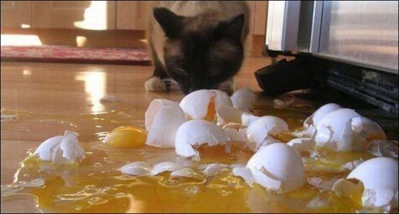 gato-huevos
