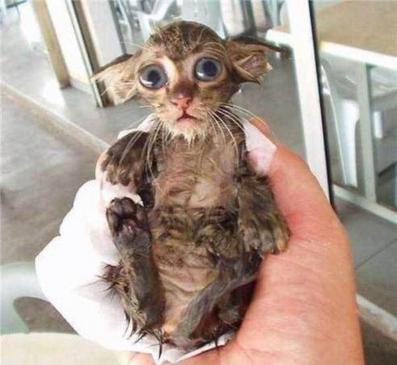 gato-mojado