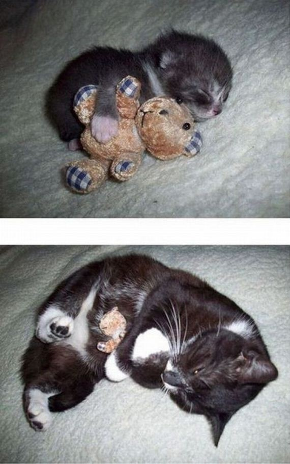 imagenes-gatos-graciosos-01