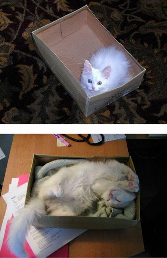 imagenes-gatos-graciosos-02
