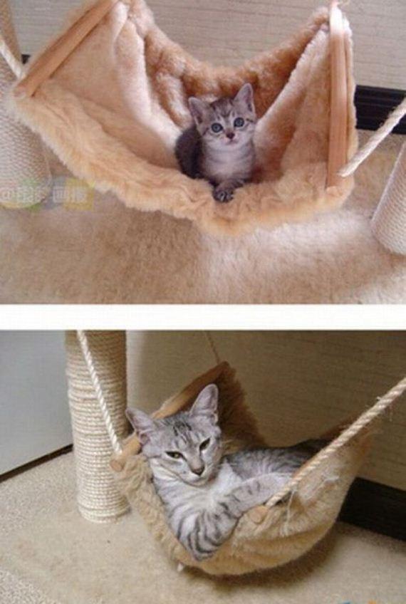 imagenes-gatos-graciosos-03