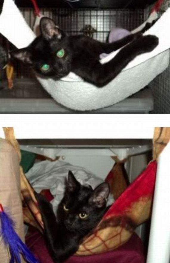 imagenes-gatos-graciosos-04