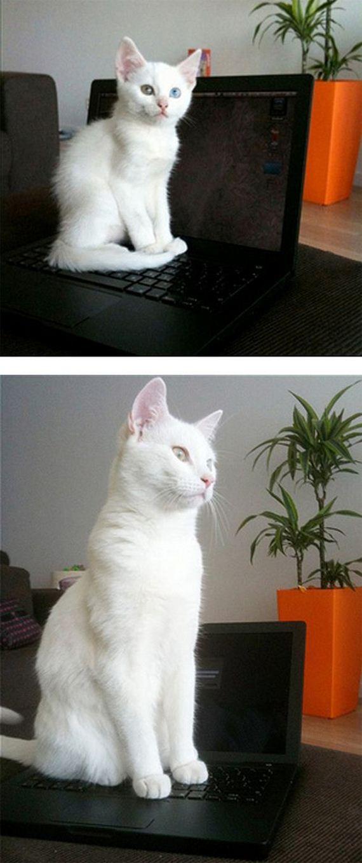 imagenes-gatos-graciosos-06