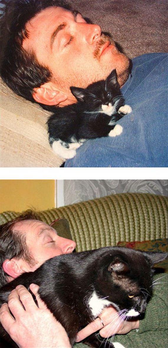 imagenes-gatos-graciosos-07