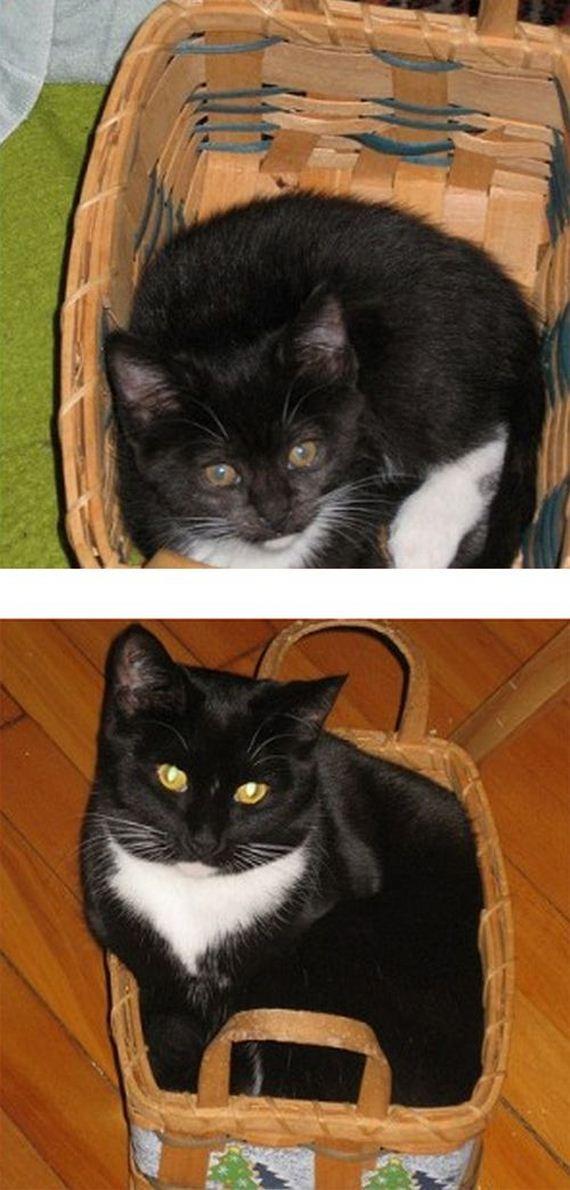 imagenes-gatos-graciosos-08