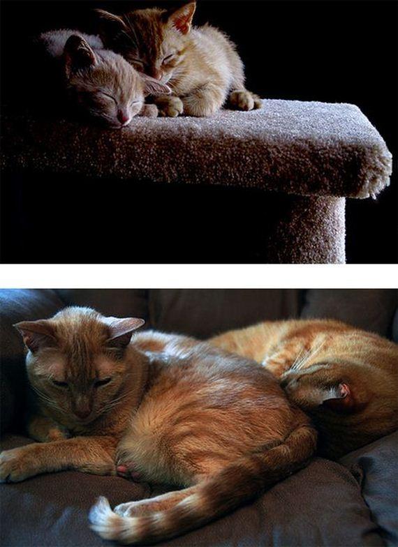imagenes-gatos-graciosos-09