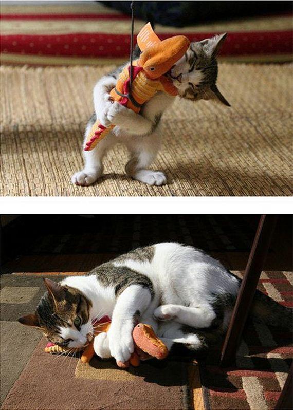 imagenes-gatos-graciosos-11