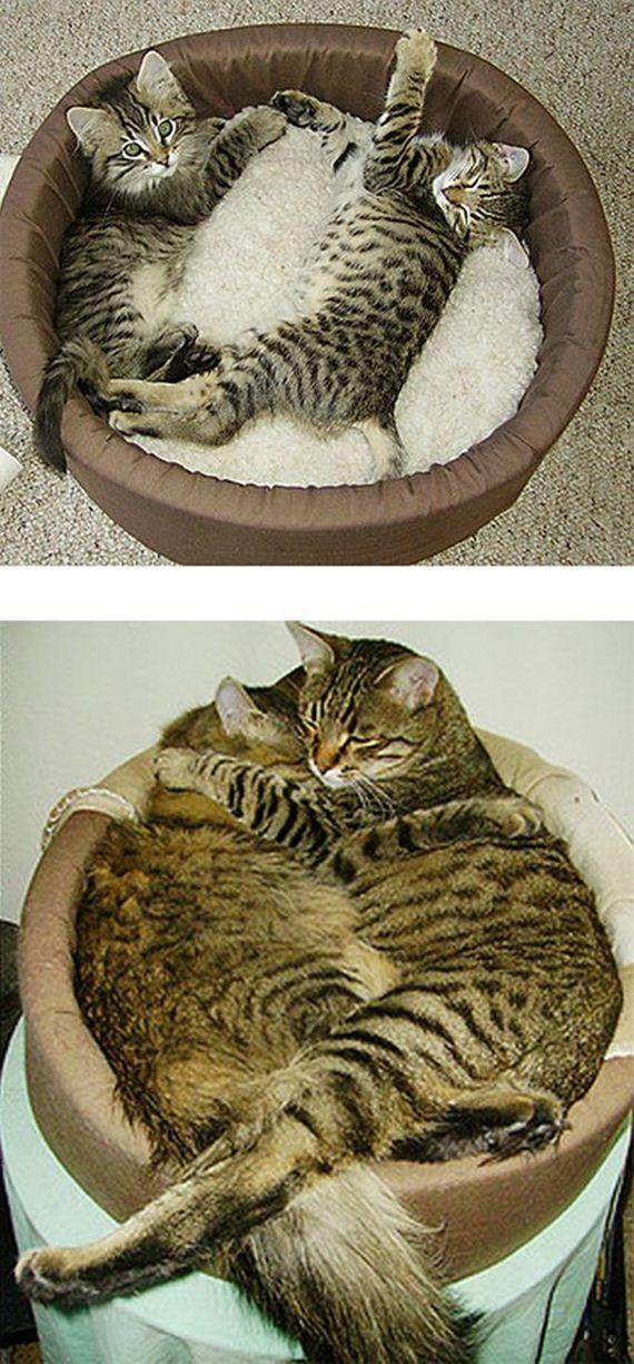 imagenes-gatos-graciosos-12