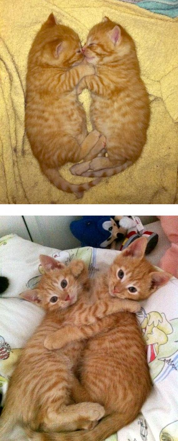 imagenes-gatos-graciosos-13
