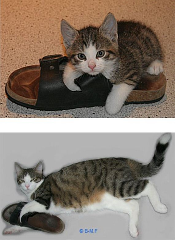 imagenes-gatos-graciosos-14
