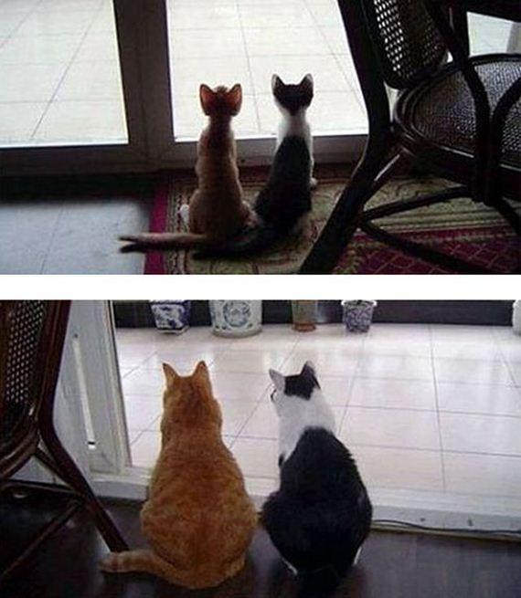 imagenes-gatos-graciosos-15