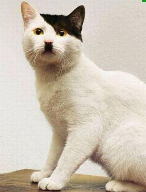 imagenes-gatos-graciosos-16