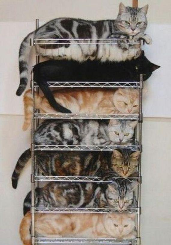 imagenes-gatos-graciosos-17