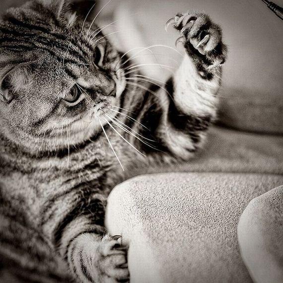 imagenes-gatos-graciosos-18