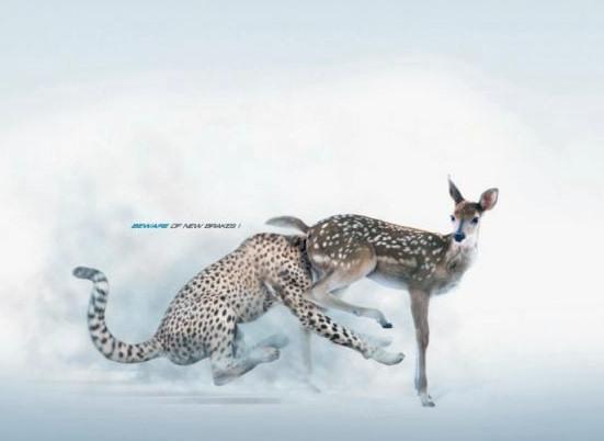 jaguar-ciervo