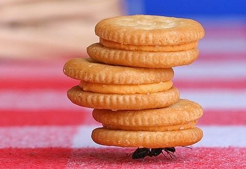 juego-hormiga-bailarina-1