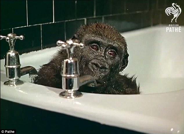 mono-bañera