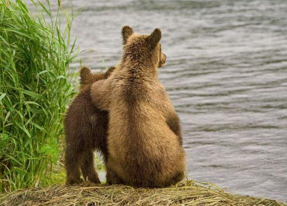 osos-amigos