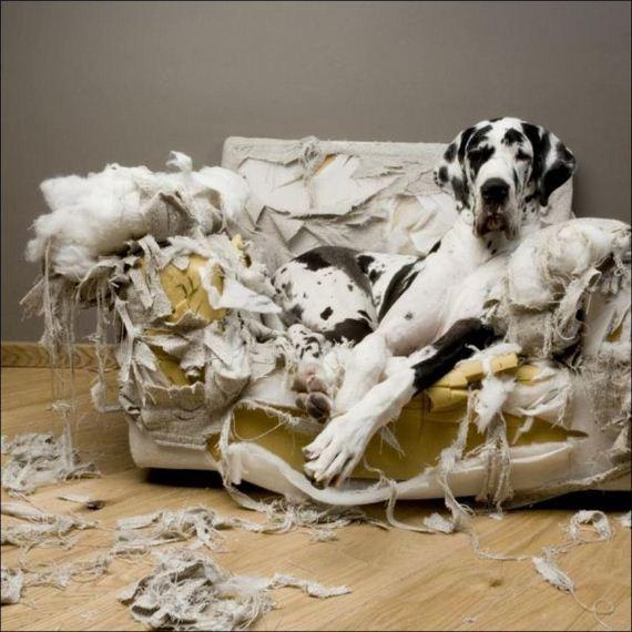 perro-destructivo