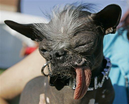 perro-feisimo