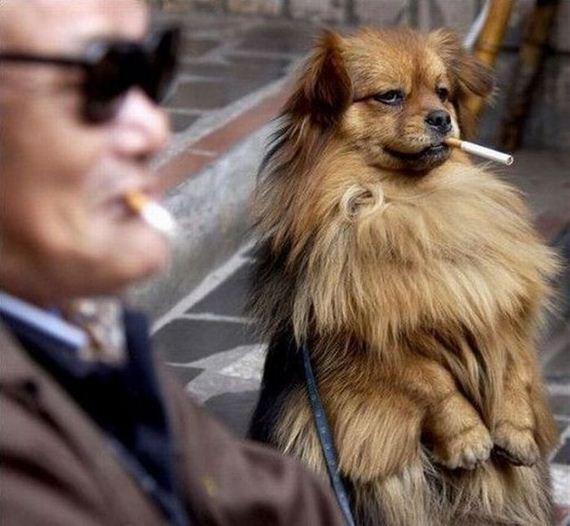 perro-fumata