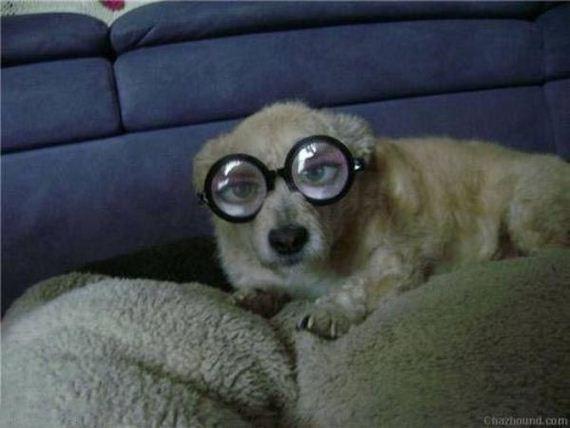 perro-miope