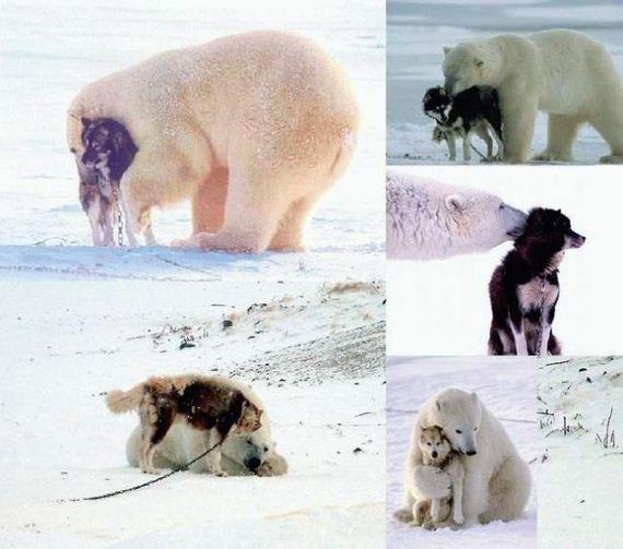 perro-oso-amistad